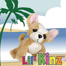 LilKinz - Chihuahua